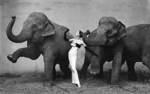 Dovima with Elephants (1955) by Richard Avedon