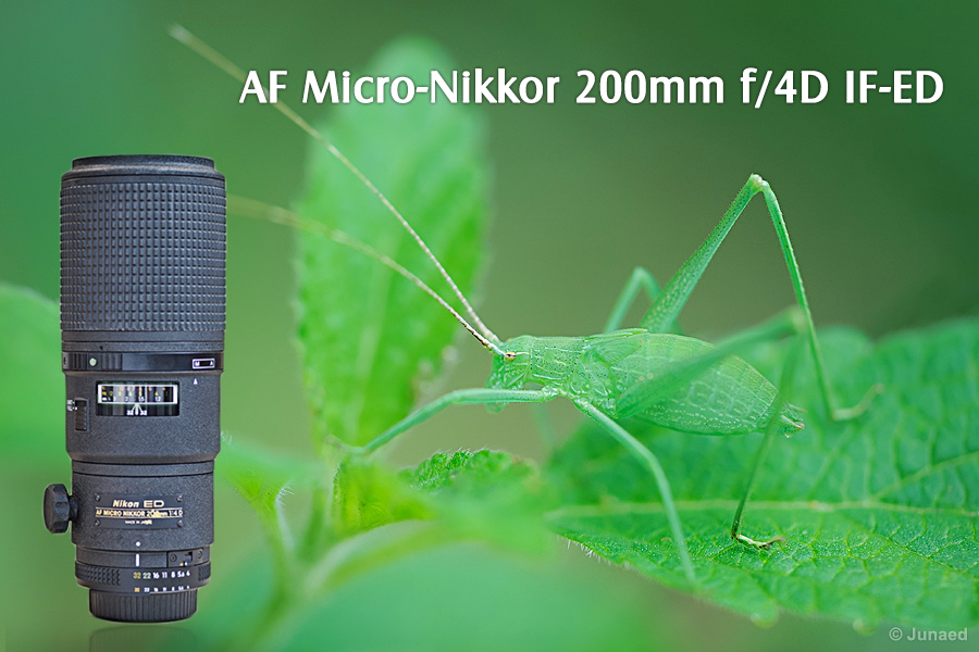 AF Micro-Nikkor 200mm f/4D IF-ED Review