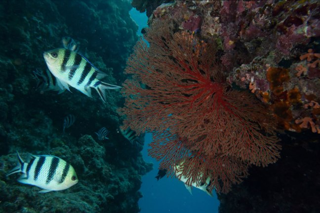 Nikon SB-N10 Underwater Speedlight sample image 02