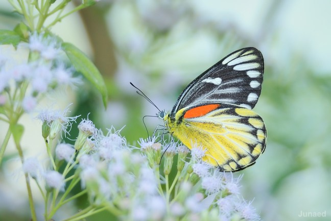 Butterfly Photography 02