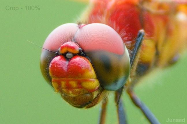 Nikon D810 Sample Image 19
