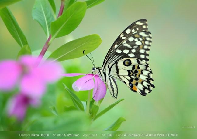 Nikon D3300 Sample Image 04