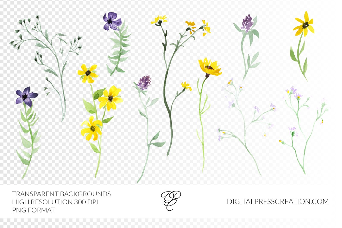 Watercolor Wildflower roses transparency clipart