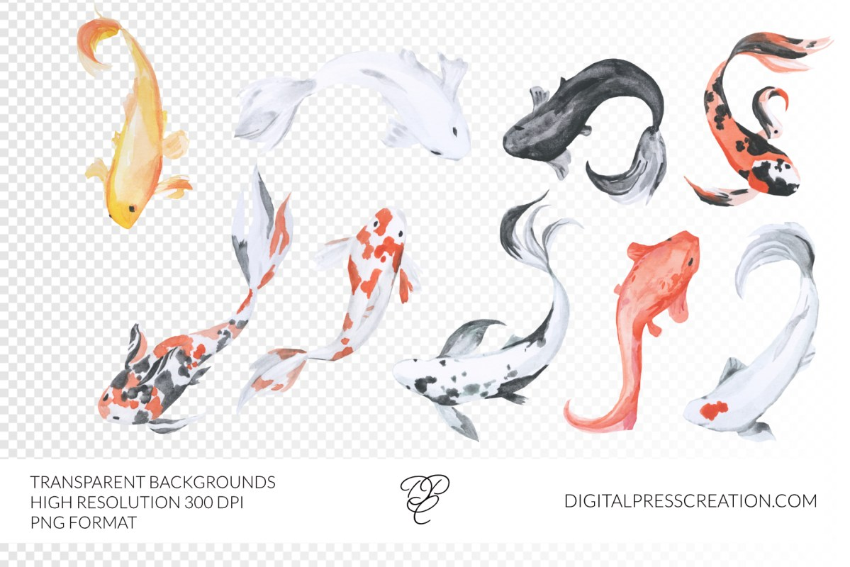Watercolor koi fish transparent background clipart, digital japanese watercolor illustration