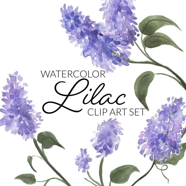 Watercolor Lilacs Clipart