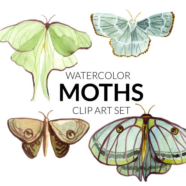 Watercolor moth clipart moths lunar clipart