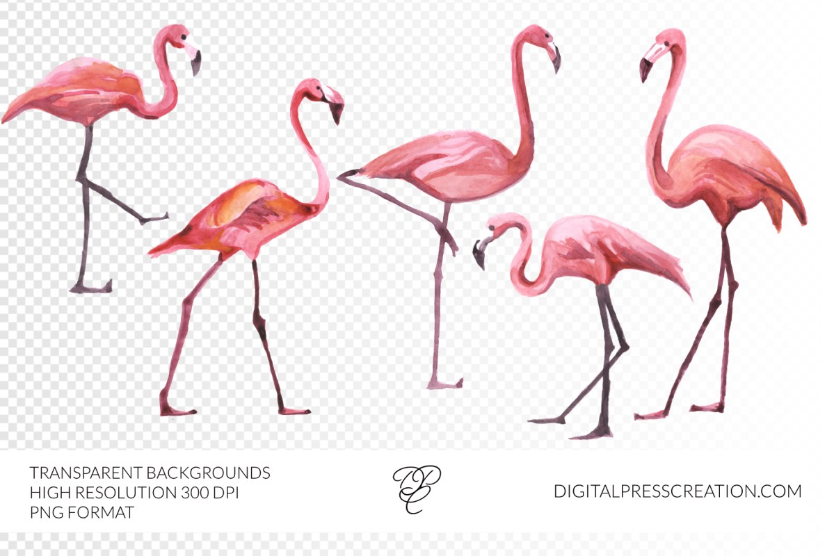 watercolor flamingo clipart