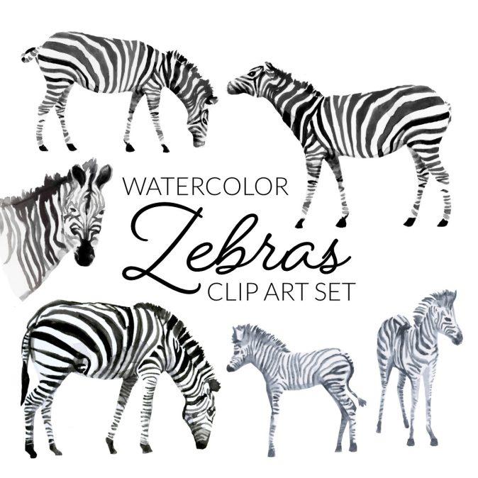 Watercolor Zebra Clipart, zebras clip art, PNG cute baby animals, animal clipart