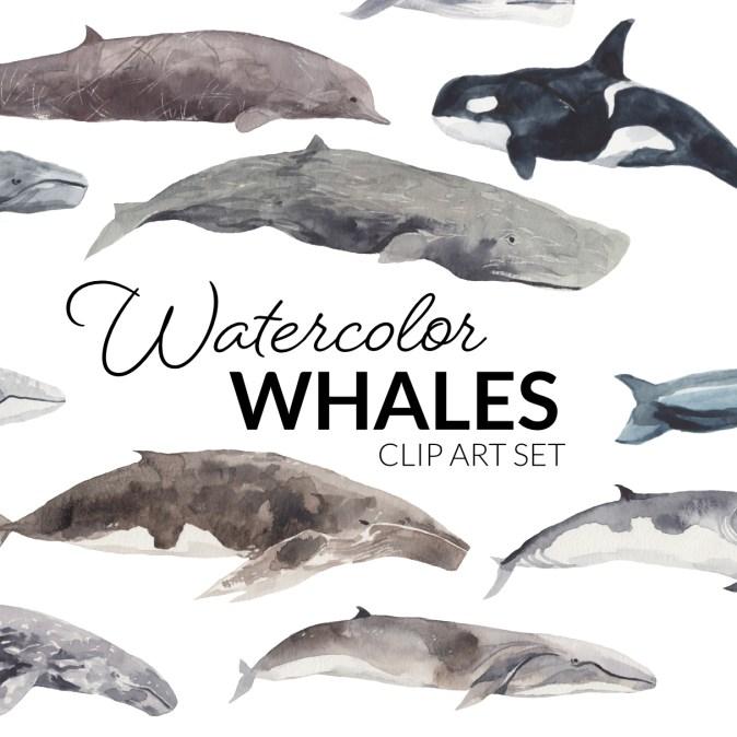 Watercolor Whales Clipart digital press creation clip art digital elements