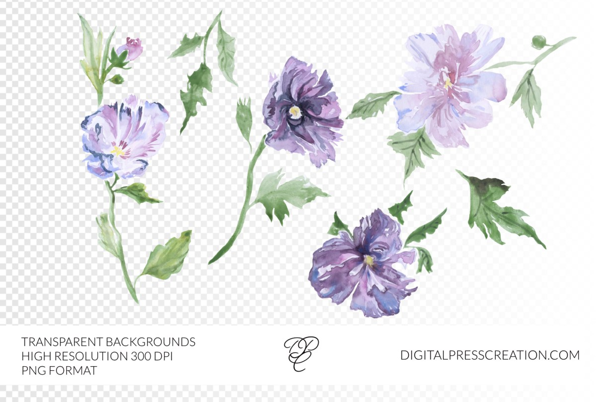 Digital watercolor images of rhododendron flowers 300DPI and PNG format transparent rhododendrons floral