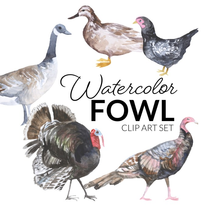 Watercolor Fowl Clipart with a duck, turkey, goose, cornish hen, PNG Clipart