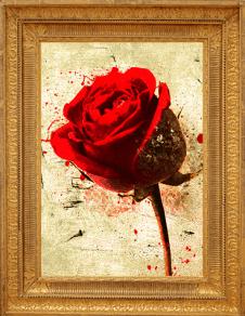 rose-digitalrachel-framed