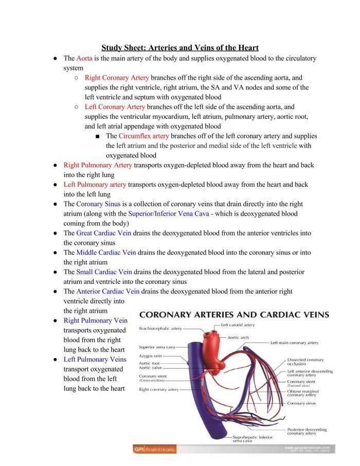 Study Sheet_ Heart_Page_1