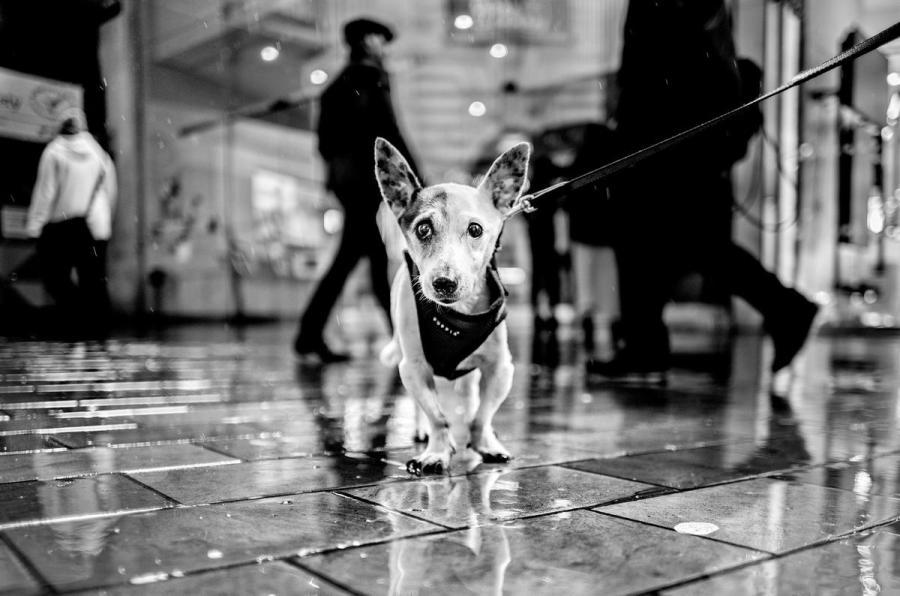 Foto tomada con Leica M10 Monochrom, perro en la calle.