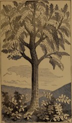 """Gigantic fern"" illustration from ""God in nature and revelation"" (1875)"