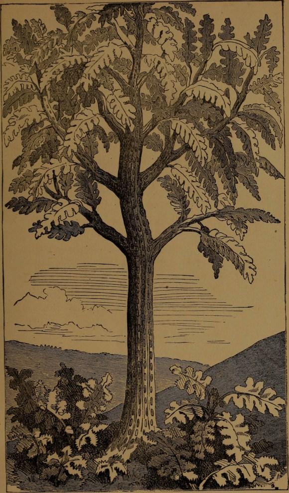 """Gigantic fern"" illustration from ""God in nature and revelation"" (1875)"