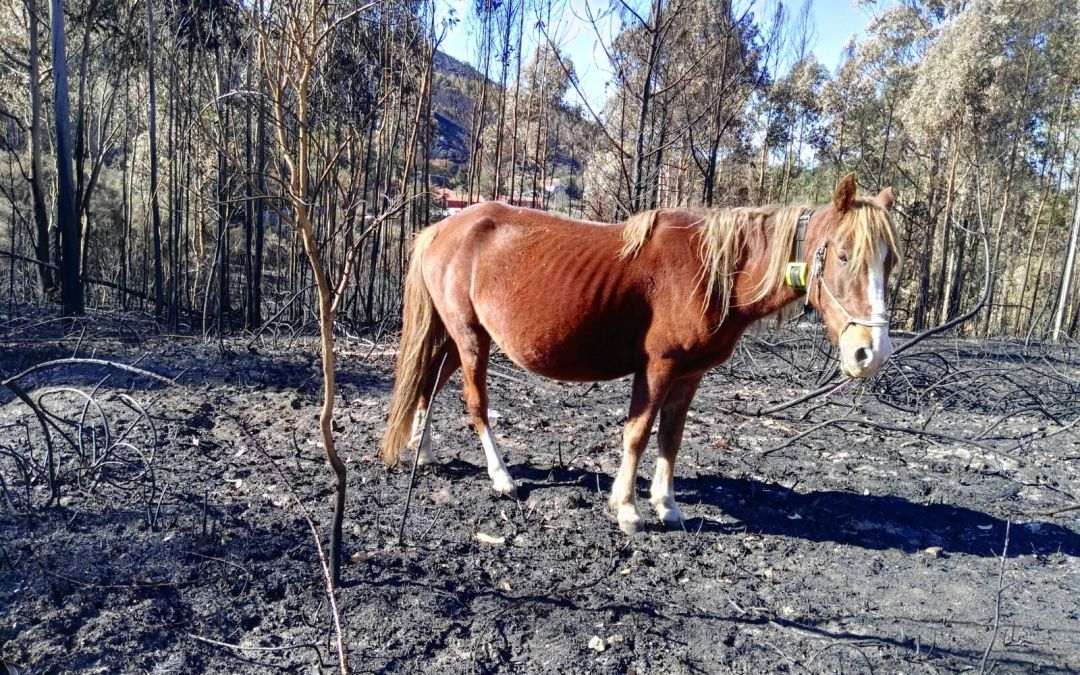 Incendios forestales, ganado extensivo y Digitanimal
