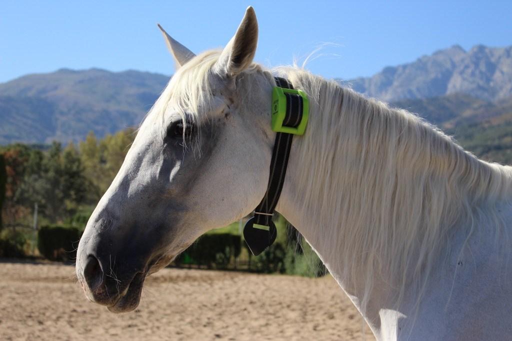 caballo_digitanimal_fr