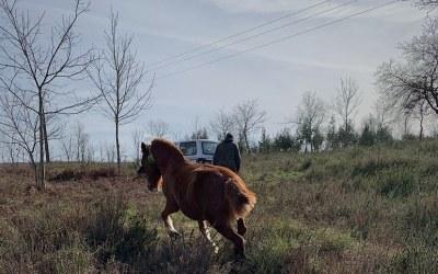 El misterio de los caballos mutilados en Francia y el papel de los Collares GPS de digitanimal