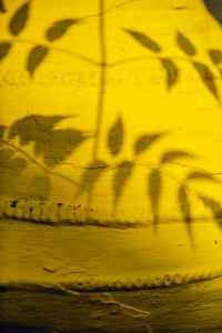 shadow of leaves on yellow wall in daytime
