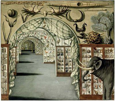 Sarah Stone Watercolor - Natural History Museums