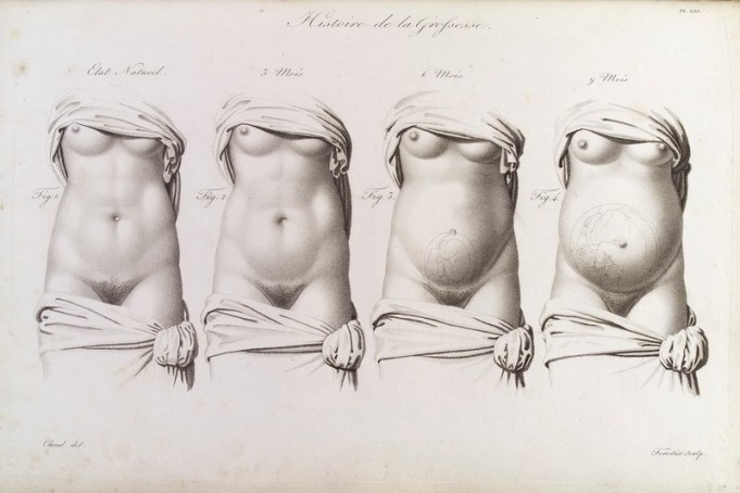 Sketches of a woman's torso as it grows through the stages of pregnancy