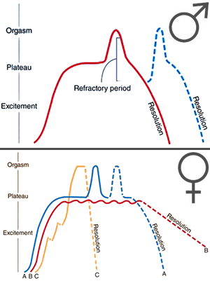graph of the sexual arousal cycle identified by Masters and Johnson