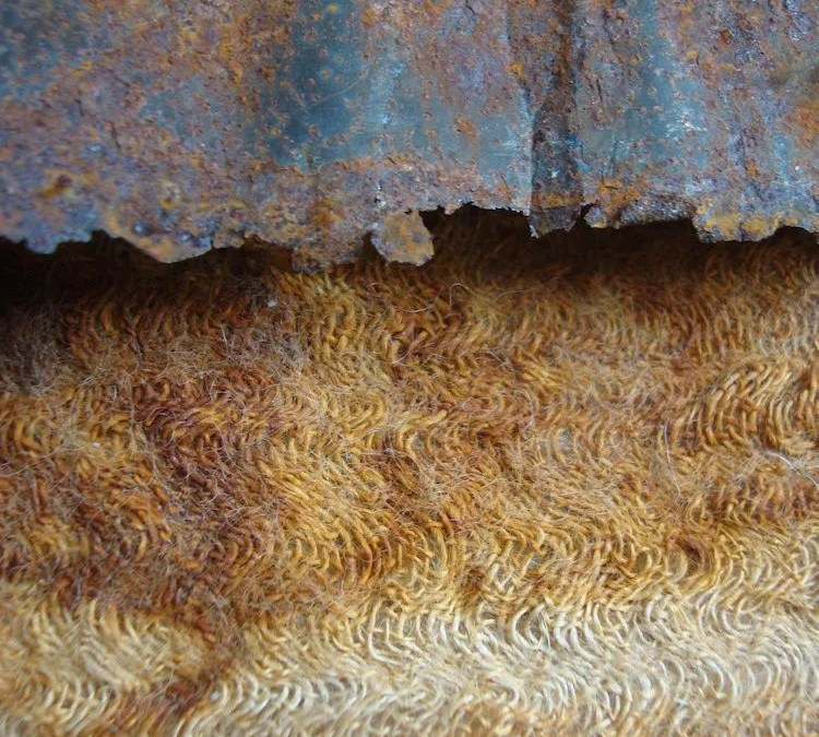 Digswell Alumni Connie Flynn exhibits in 'From the Earth' exhibition