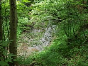 trees, waterfall