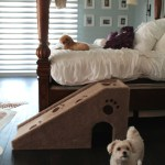 Room Decor That Intergrates Your Dogs Comforts 10 Dog Bed Design Ideas