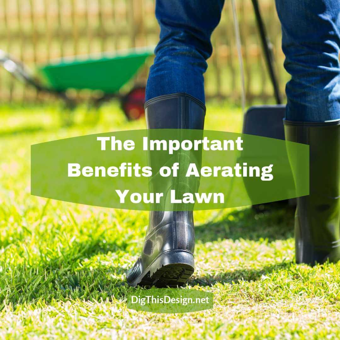 The Important Benefits of Aerating Your Lawn