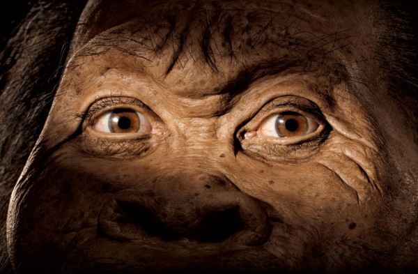 Homo naledi face