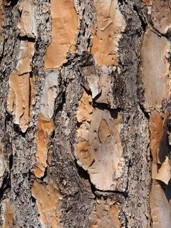 A Little Bit of Tree Bark 5