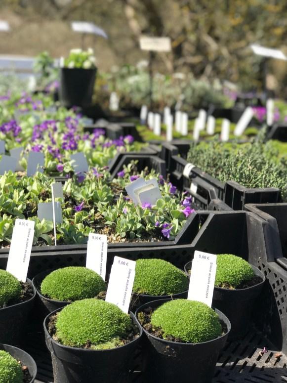 Cvetni market u okviru Botaničke bašte