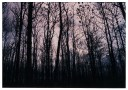 Hutan Jati Wonosari