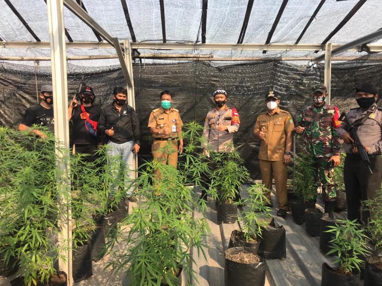 Berkebun Ganja di Rumah Lantai 2 Kp Poncol Diungkap Polsek Ciledug