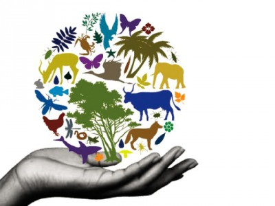 Pentingnya Indonesia Menjaga Kelestarian Keanekaragaman Hayati