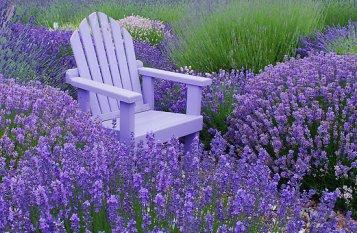 Lavender-Fieldchair