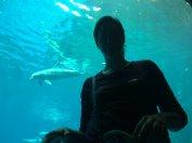 la mamma e il delfino