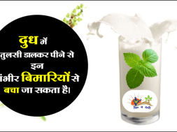 Importance of Tulsi milk