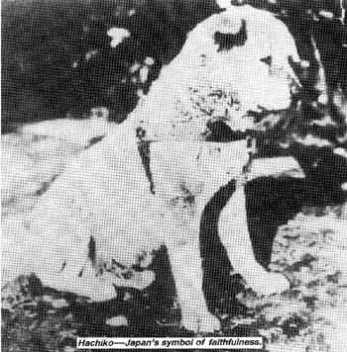 hachiko-photographed-when-a