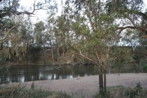 Farleigh Reserve, Cowra (NSW)