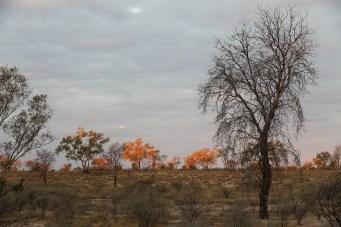 Winton - Bough Shed Waterhole Sunrise (Qld)