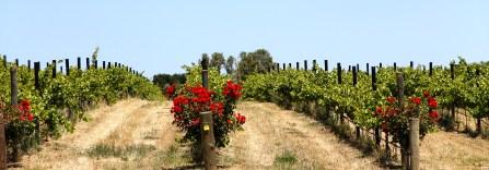 Fleurieu Peninsula - Angove Winery (SA)