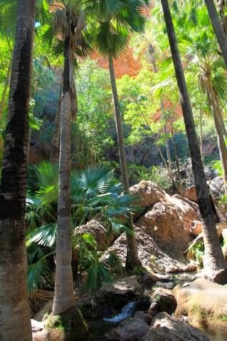 El Questro - Zebedee Springs (WA)