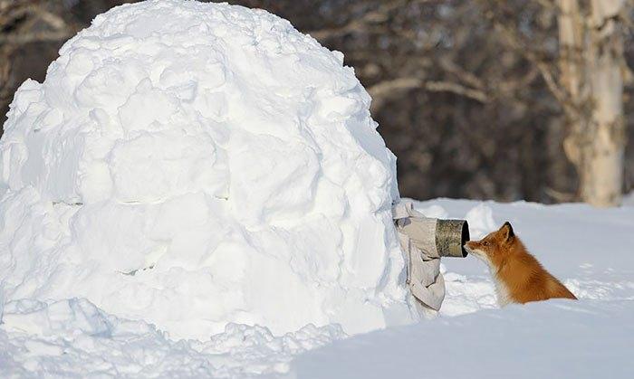 Tak Apa Tubuhku Ditutupi Salju