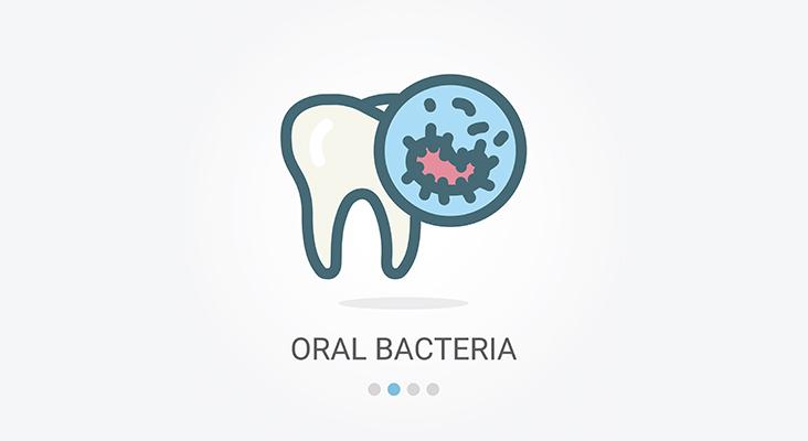 Oral Bacteria Vector