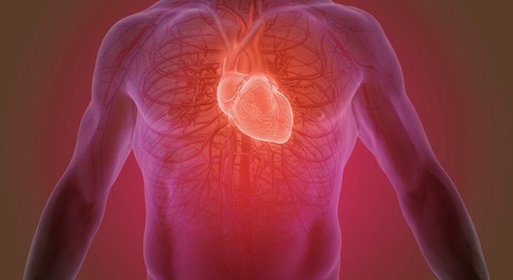 Abdomen and heart graphic