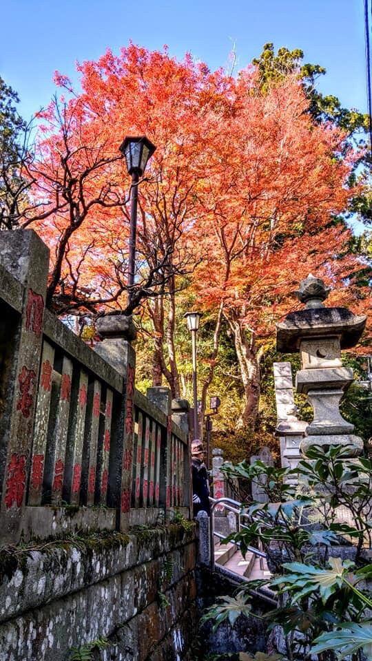 高尾山 Attractions - 東京 Travel Review -2019年12月5日Travel Guide - Trip.com