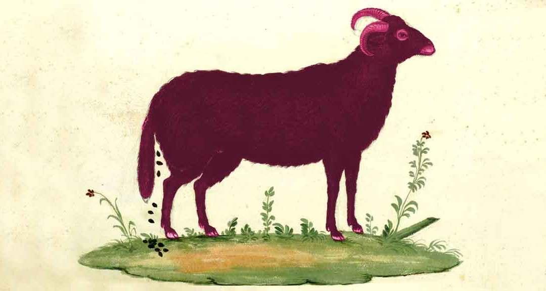 Keumaya – Pink Goat Daughter [NSFW]